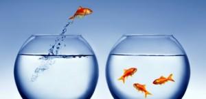 Fish-Jumping-To-New-Bowl