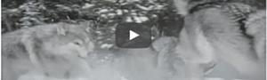 Korte video over Persoonlijk Leiderschap